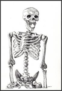 Maureen Paxton ink drawing of a grinning skeleton, shown from hips upwards.