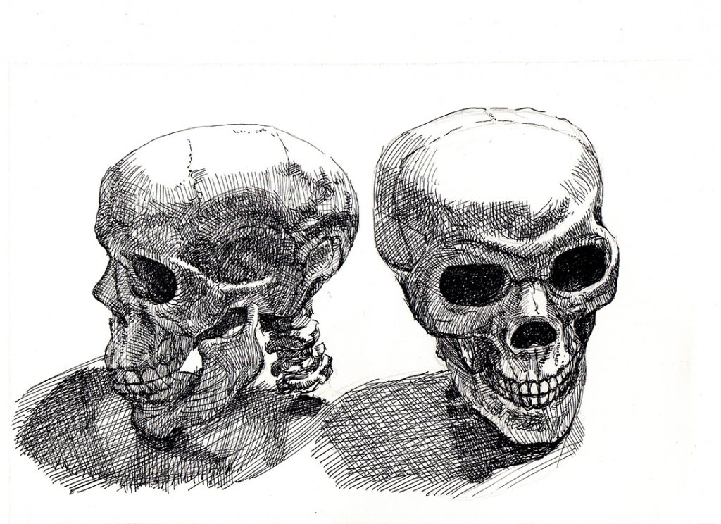 Maureen Paxton ink drawing of a skull, shown from two angles.