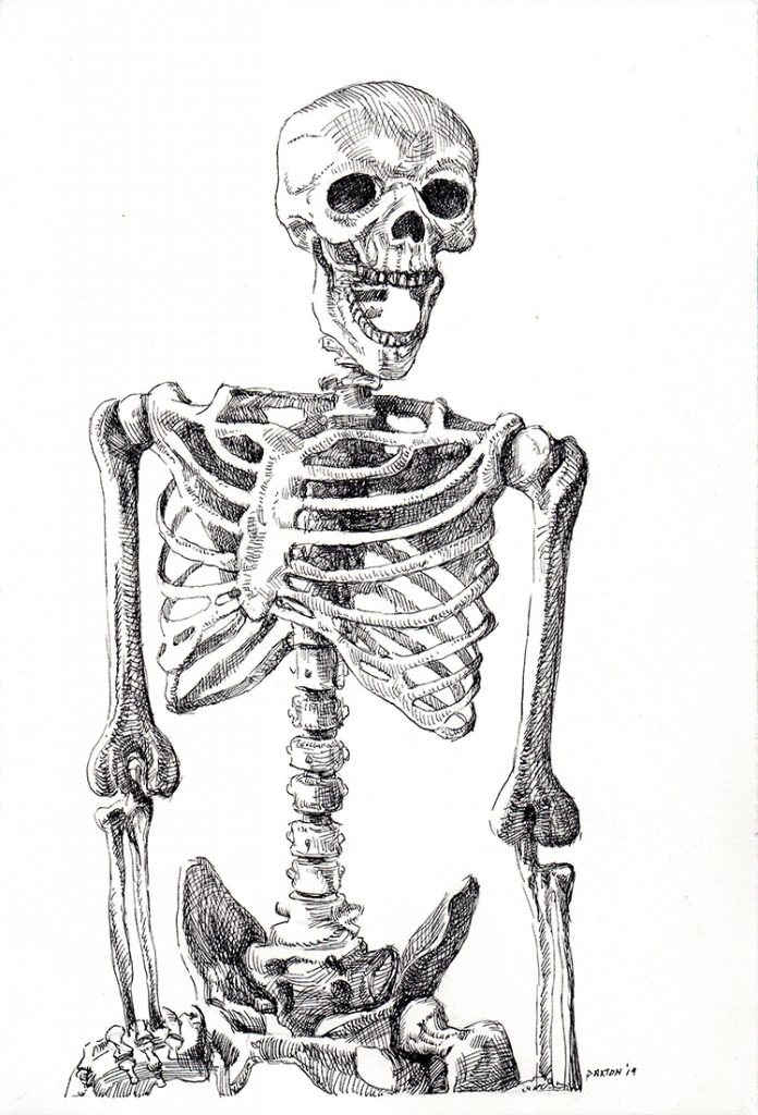 Small study, an ink drawing of a laughing skeleton, from the thighs upwards.