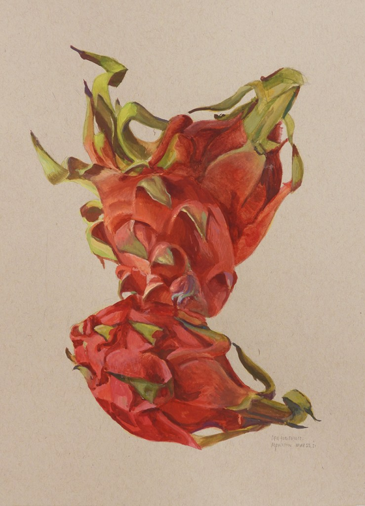 A small study of four repositioned dragonfruit painted in gouache on toned Strathmore paper